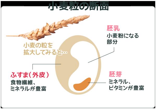 小麦粒の断面